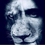 LION Media